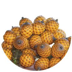 Rattan palm seed